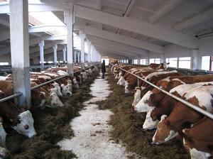 Фото - Сельское хозяйство