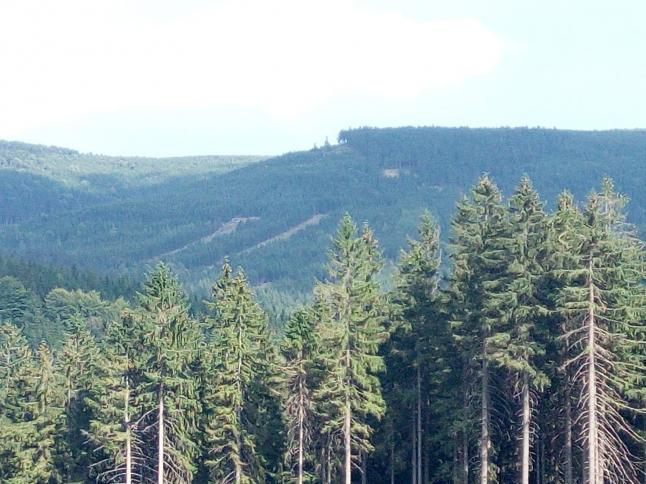 Фото - Работа в лесу. Доставка кругляка в любую точку Евразии.