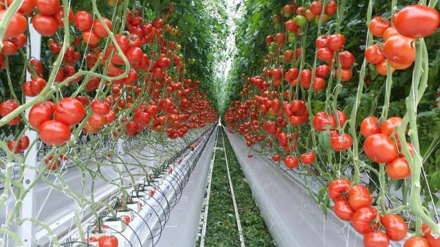 Фото - выращивание и переподготовка товара для экспорта