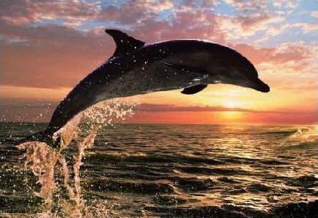 Фото - Остров Голубого Дельфина