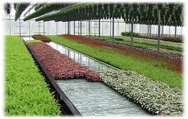 Photo 1 - Cultivation of fish and vegetables